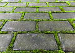 Life between the cracks (Canadian Dragon) Tags: life china moss pattern wuxi grow growth cracks pavingstone jiangnanuniversity dschx5c