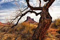 Framework (Jeff Clow) Tags: mountains southwest tree nature landscape natural frame framework mesa moabutah professorvalley theriverroad tpslandscape tpsnature