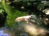7-22-2012ArnoldArboretum026
