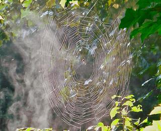 September Webs 5