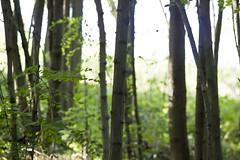 green&line (gionisign) Tags: trees italy verde green nature alberi italia bosco