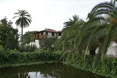 Icod de los Vinos, Spain, May 2013
