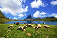 Relaxing in Lac d´Ayous (Legi.) Tags: horses mountains clouds caballos nikon cows lac sigma nubes midi 1020 montañas vacas pyrénées pirineos pirineo ossau ayous d5100 lacd´ayous