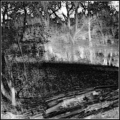 Forest Log and Leaf (Tim Noonan) Tags: autumn trees light shadow bw white black leaves digital forest photoshop leaf log merci hill awardtree maxfudgeawardandexcellencegroup magicunicornmasterpiece vividnationexcellencegroup vision:outdoor=0981