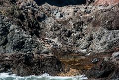 cruise newzealand blackcat boat rocks seals bankspeninsula akaroa newzealandfurseal kekeno domonsbay