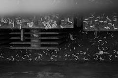 Culpa (fustterphs) Tags: life blackandwhite bw white black blancoynegro trash underground dead garbage junk floor cigarette smoke cancer ground cigar bn deck basura subterraneo subterranean suelo cigarros contaminacin waster cncer noclor