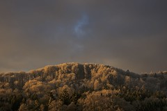 The golden Age (Manuel.Martin_72) Tags: morning trees winter light sky mountain tree berg forest gold golden schweiz switzerland licht cloudy sony magic hill illumination himmel alpha wald morgen baum enchanted beleuchtung winterthur goldenli