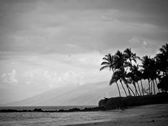 The palm trees and the beach (Julien_V) Tags: blackandwhite bw usa beach hawaii noiretblanc maui palmtree plage palmier hawa