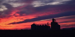 Grain Elevators and Bins (forestforthetress) Tags: rural sunsets farms cadwell grainelevators grainbins omot