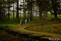 Road To The Jungle (Slice Of Life by Vinay Singh) Tags: road trees india forest golf shimla course jungle himachal pradesh naldhera