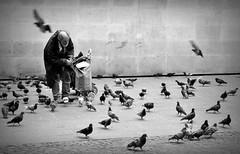 (Joerg_M) Tags: street bw paris photography nikon pigeons d3000