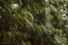 Norooz Snow (Arash Sefid) Tags: snow iran eid arash norooz sefid 1393 24120 d700