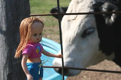 Sara interrupts the calf's drink (Crazyquilter) Tags: vintage doll sara cattle calf nancyannstorybookdoll nasb traveldoll