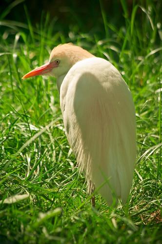 A shy bird