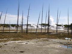 CF011279 1 (sailronin) Tags: usa mud bluesky steam wyoming geysers deadtrees carlzeiss hasselblad501cm yellowstonepark phaseonep30 50mmdistagon captureone7