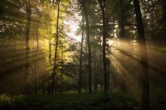 It's a beautiful day (Jos Mecklenfeld) Tags: morning sun mist nature netherlands misty fog forest sunrise walking minolta hiking wandelen walk sony natur natuur sbb hike groningen bos lopen wald zon sunray laufen terapel nex 3n westerwolde zonnestralen staatsbosbeheer zonsopkomst wadern minoltaaf28f28 roelagebos sonynex laea2 sonylaea2 nex3n sonynex3n