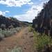 Douglas Creek