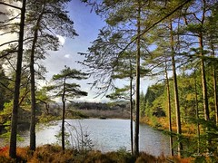 Lochan a' Ghleannain through the Pines of the Loch Ard Forest. March 2017. (Jen_wilsonphotography) Tags: walking spring nature iphone uk trossachs scotland aberfoyle lochardforest trees forest lochan lochanaghleannain