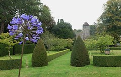 the little church with agapanthus at Hinton Ampner (quietpurplehaze07) Tags: hintonampner blue agapanthus