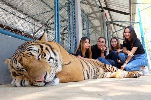I LOVE TIGER