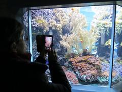 00734947 Aquarium Berlin 1 - 2017 (golli43) Tags: aquariumberlin zoo fische krokodile quallen wasser wasserpflanzen amphibien insekten unterwasserwelt