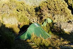 20170302-08-Campsite (Roger T Wong) Tags: australia greatpinetier np nationalpark sel70300g sony70300 sonya7ii sonyalpha7ii sonyfe70300mmf2556goss sonyilce7m2 tasmania wha wallsofjerusalem worldheritagearea bushwalk camp hike tent trektramp walk