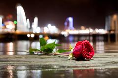 Rainy Night Rose (shahbaz0_0) Tags: rose flower city night barcelona rain nikond5500 tamron 1750mm f28 vr