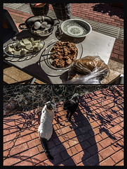 Getting it sorted (Melissa Maples) Tags: antalya turkey türkiye asia 土耳其 apple iphone iphone6 cameraphone multipanel diptych animals kitties cats domvkonyaaltı russian man hands eggs cheese tuna lunch food catfight spring
