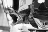 Film: Jaws (rafa.esteve) Tags: film blackandwhite blackwhite kodak kodaktmax400 tmax 400tmx