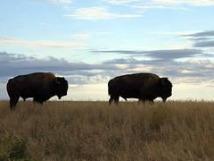 American Prairie Reserve 11