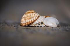 una giornata al mare - one day at the sea (Angelo Petrozza) Tags: sea mare giorno day conchiglie shells pentaxk70 55300f458 metaponto basilicata angelopetrozza