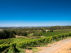 view from the pike & joyce winery