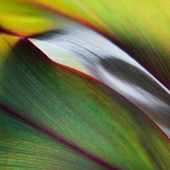 Leafy lines (Andrei Grigorev) Tags: leaf leaves plant botanical texture abstract lines green red