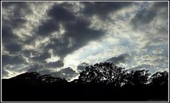 En regardant vers le haut de la falaise (bleumarie (en panne d'ordinateur !)) Tags: cerbère pyrénéesorientales suddelafrance roussillon catalogne voilé nature bleumarie paysage contrejour silhouette arbre falaise contreplongée lumière luminosité ombre soleil mariebousquet nuage couverturenuageuse météo