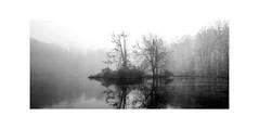 Audubon Winter Snow (Marc Jacobs Photo) Tags: audubon audubonsociety panorama fog deadtrees