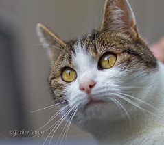 IMG_8424 (Esther Vinju Photography) Tags: pet cats pets cat katten kat esther tuin huisdier poes poezen huisdieren vinju