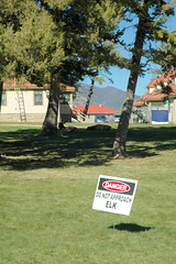 159 - Elk & Elk Danger sign (Scott Shetrone) Tags: animals events places yellowstonenationalpark elk mammals 7th mammothhotsprings anniversaries wymoing