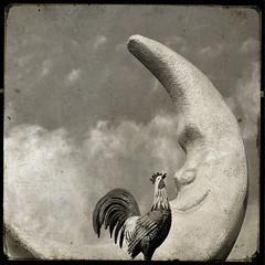 Good Morning (Seeing Visions) Tags: sky sculpture usa moon monochrome clouds mi america square restaurant us unitedstates michigan lansing crescent rooster statecapital maninthemoon goldenharvest 2013 fakettv raymondfujioka