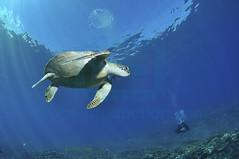 2012 07 METTRA OCEAN INDIEN 0172