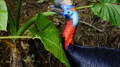 (ddsnet) Tags: bird birds zoo sony hsinchu taiwan      nex  sinpu hsinpu bird zoo mirrorless zoobird    newemountexperience nex7