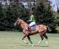 #1 green 2 (Sue Quinn©Photography) Tags: 3 ottawa aug polo invitational 2013 ellisdon