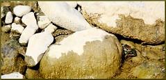 163 (Martina Miradoli) Tags: snake frog rana serpente snakeeating