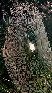 September Webs 1
