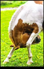 Colli 3 (Jan Dierkes) Tags: horse nature photography friend photographie natur soul feeling pferde pferd freund gefhl jandierkes