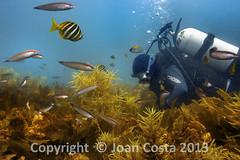 UWA OCeans Institute (UWA Oceans Institute) Tags: ocean ecology university australia science research maritime perth wa biology oceanography marineecology uwa
