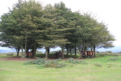 Seven Sisters (huw.shields) Tags: sisters canon is hill vale seven 200 7d ponies 18 huw shields taunton exmoor quantocks cothelstone