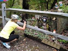 Gnome Roam 2013 (cal.woodward) Tags: bicycling gnome roam yorkheritagetrail torreycbrown gnomeroam