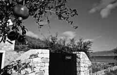 Private (roksoslav) Tags: nikon croatia pomegranate dalmatia nar bra postira lovreina 2013 ipak afsdxnikkor1855mmf3556gvr d5100