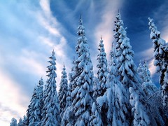 238 (2) (muthukumarc) Tags: trees winter sky snow clouds landscapes scenery europe sweden scenic dramatic nordic scandinavia torsby ruralscenes varmland lekvattnet