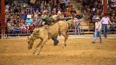 20131108 5DIII Davie Pro Rodeo56 (James Scott S) Tags: girls horses sport cowboys speed canon scott photography eos james is high florida action mark no flash barrel fast 8 competition s bull racing bulls riding ii rodeo hi fl cowgirls davie broncos 70200 eight f28 ef seconds weekley 5diii